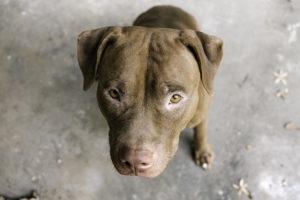 Lee más sobre el artículo Perros de raza peligrosa: nueva legislación