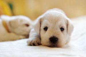 Lee más sobre el artículo ¿Es obligatorio el seguro de responsabilidad civil para perros?
